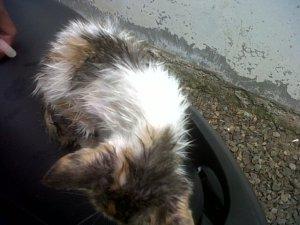 Merawat Kucing