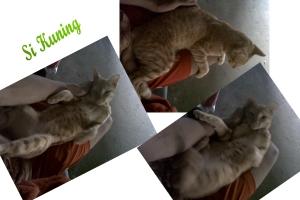Kucing Kampung Lucu