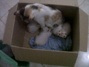 Anak Kucing Lucu